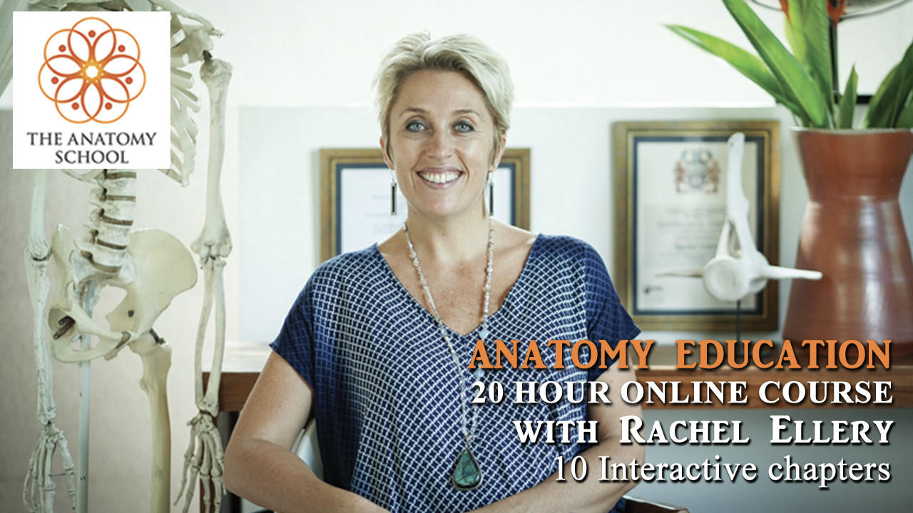 Online Anatomy Education